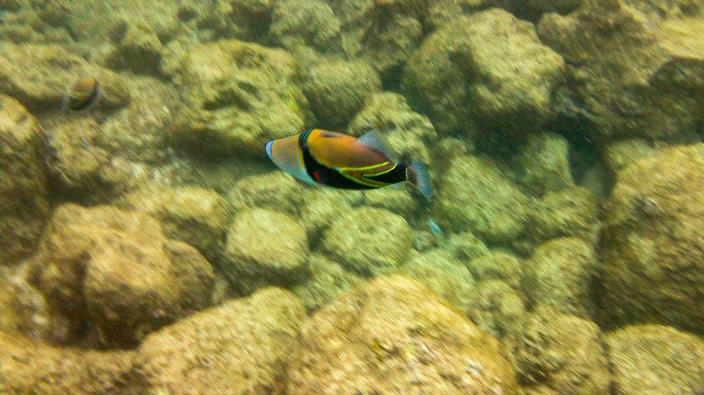 Kauai Snorkeling-39.jpg