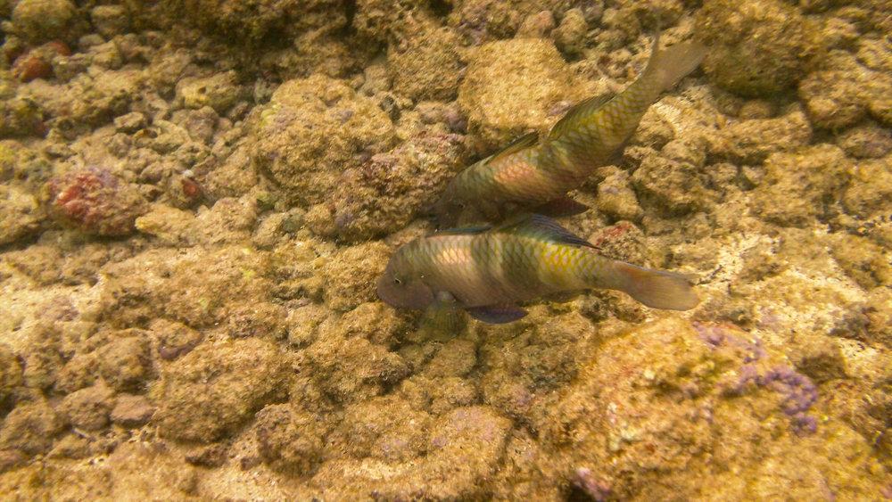 Kauai Snorkeling-42.jpg
