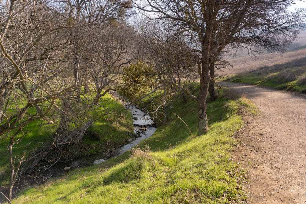 Mount Diablo Waterfall Loop-23.jpg