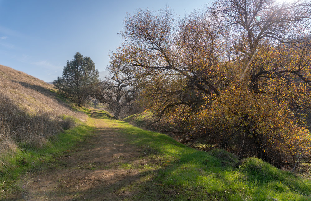Mount Diablo Waterfall Loop-68.jpg