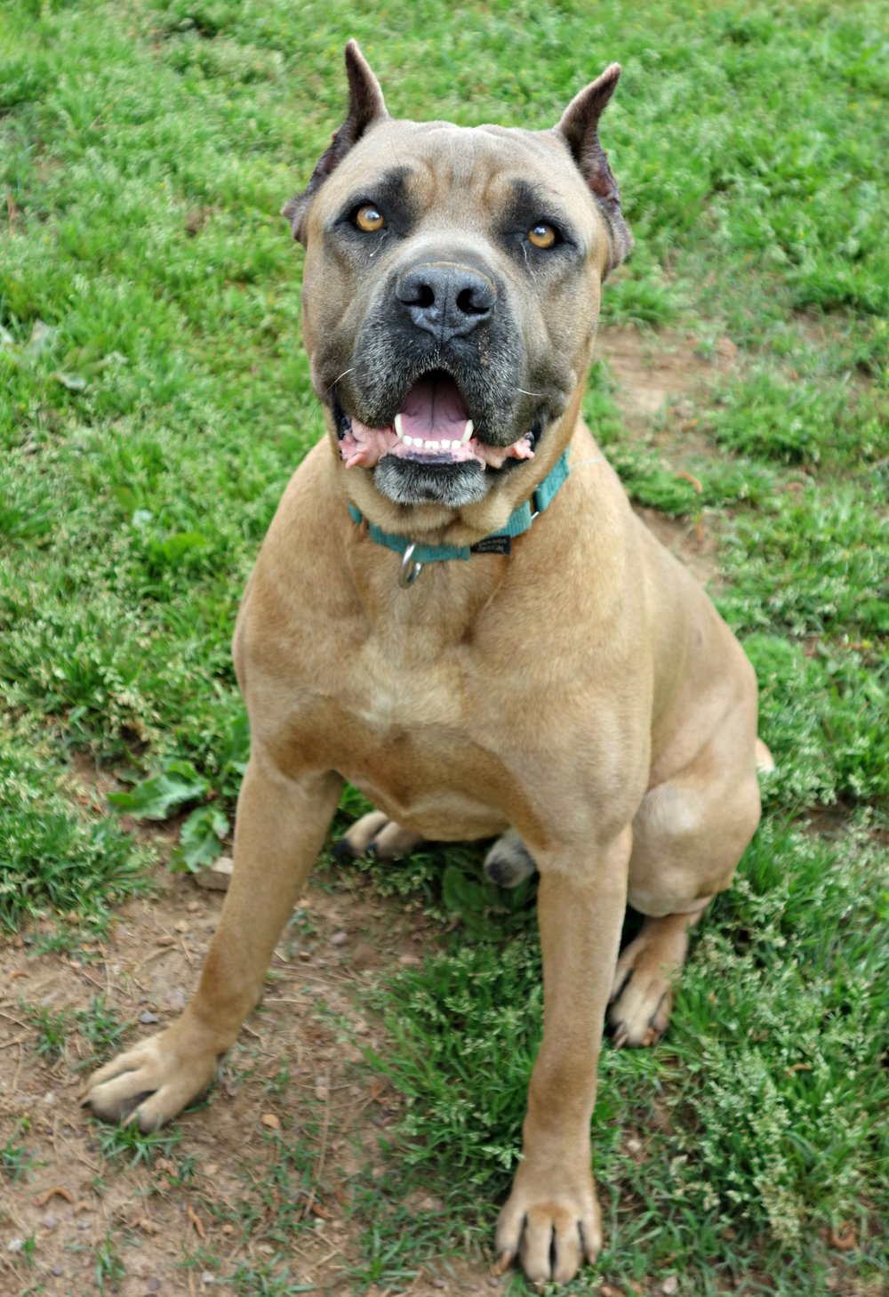 Gatsby is a great 1.5 year old guy that loves to play with toys!