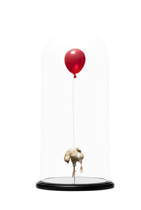 Still-Birth-Red_1LR.jpg