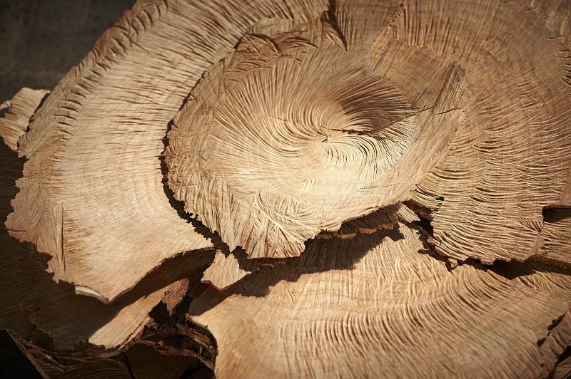 09_Herbert Golser, flora (detail), 2012, cherry woord, 58x55x27cm.jpg