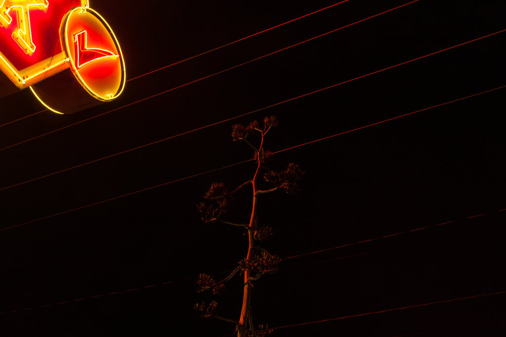 Lamar Boulevard  Austin, Texas (2015)