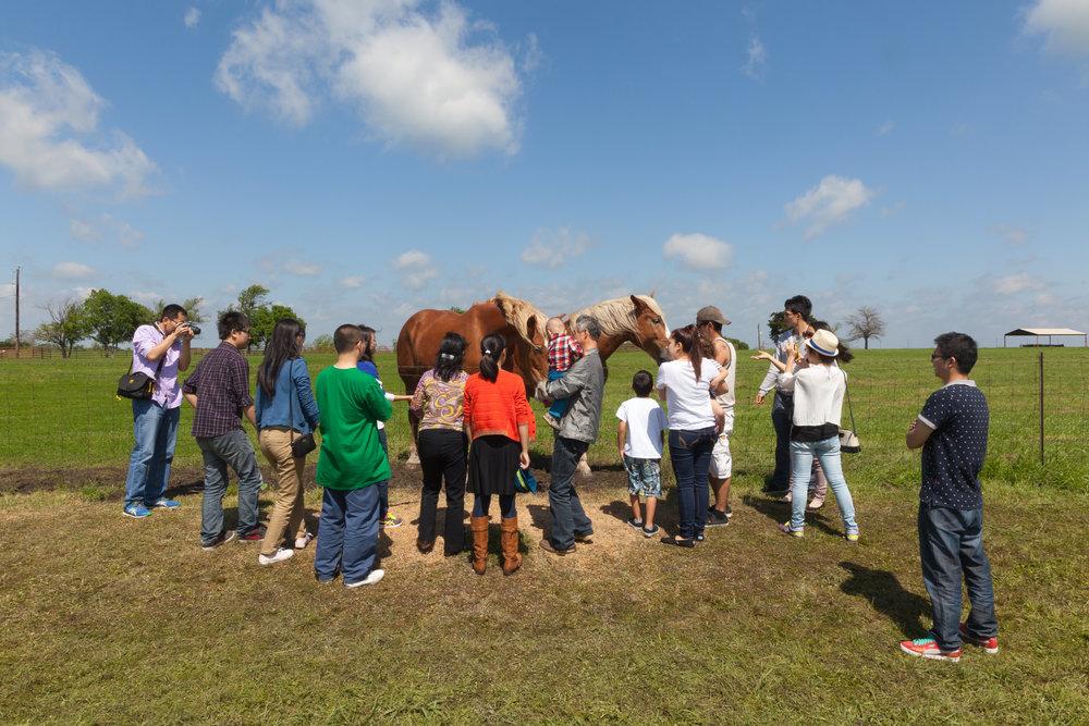 The Bluebonnet Trail  Palmer, Texas (2015)