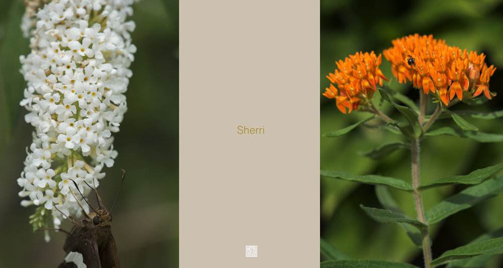 Portrait Garden (Sherri)