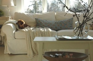 271 - sofa with dacscund dog - ektorp ikea sofa