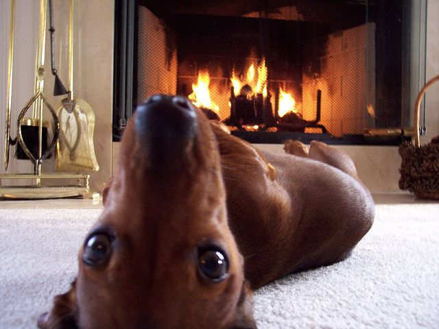 I hope you enjoyed all these fun pet ideas for your home. Leave me feedback or attach your photos to let me know what  you  have done for your pets in your homes.