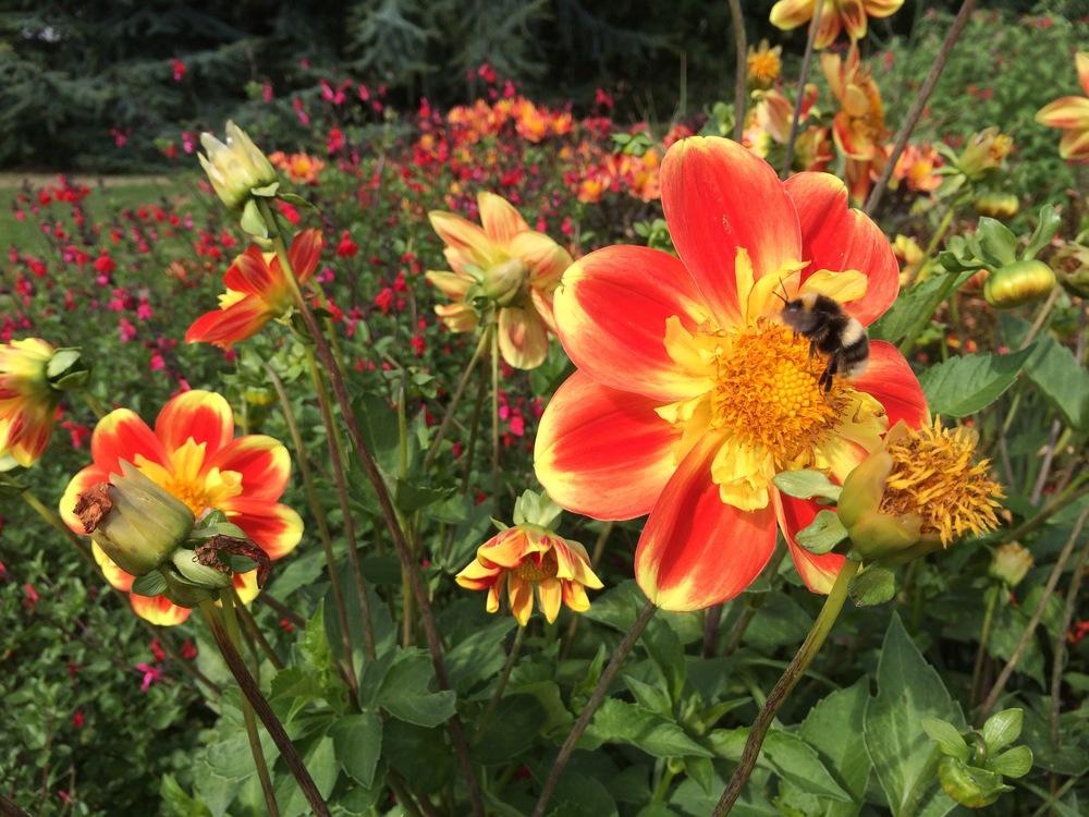 Bumblebee at Kew Gardens