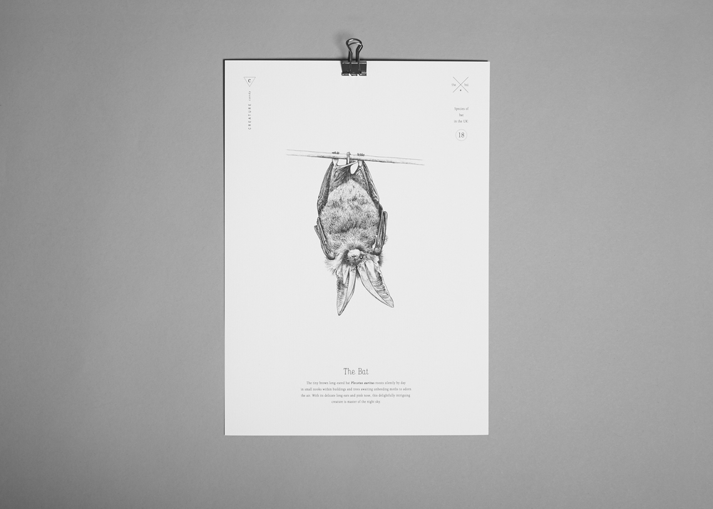 A4 bat print £10.00 (including a £1.00 donation to the  Bat Conservation Trust )
