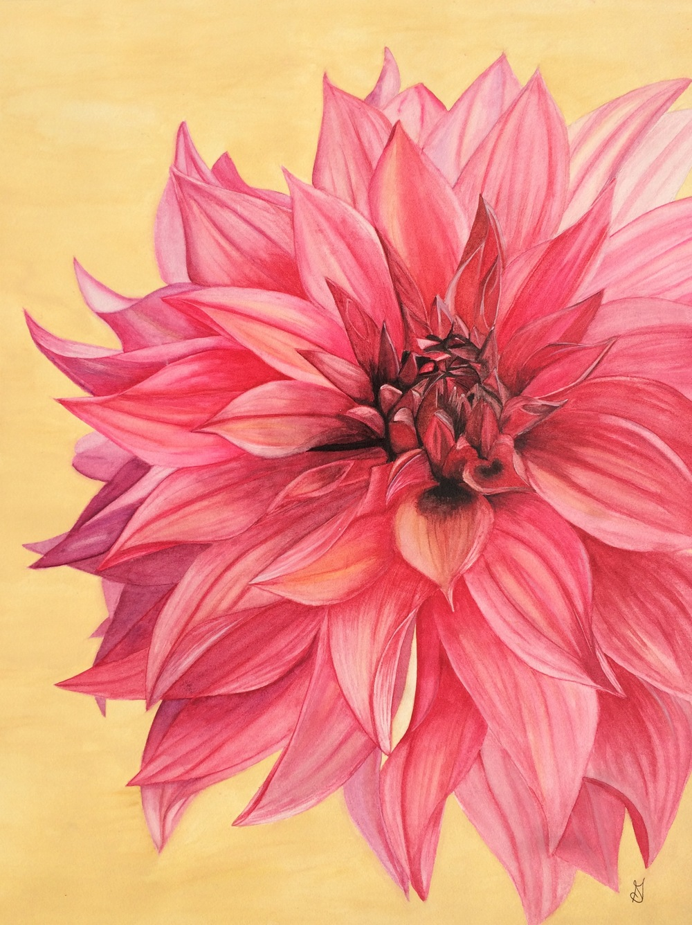 83 Giant Pink Flower Gswatercolor