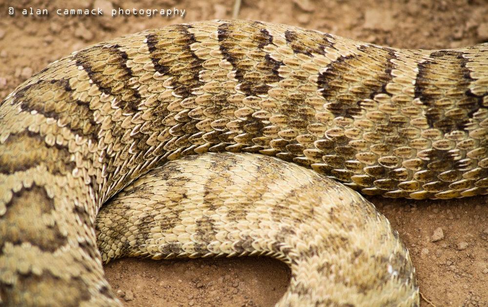 Serpent Texture