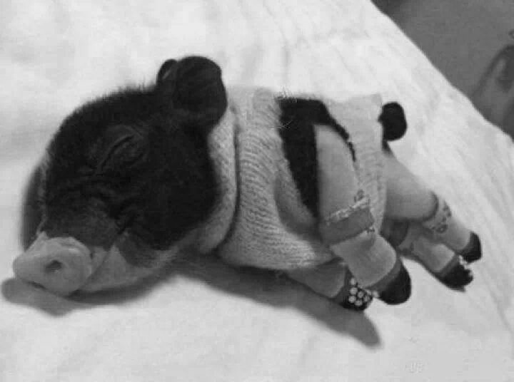Sleeping Pig B and W.jpg