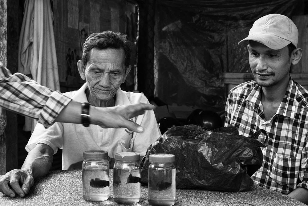 Betta fish fighting, Battambang Province, Cambodia, 2015