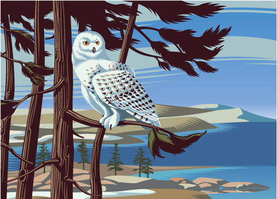 Snowy Owl - GA621