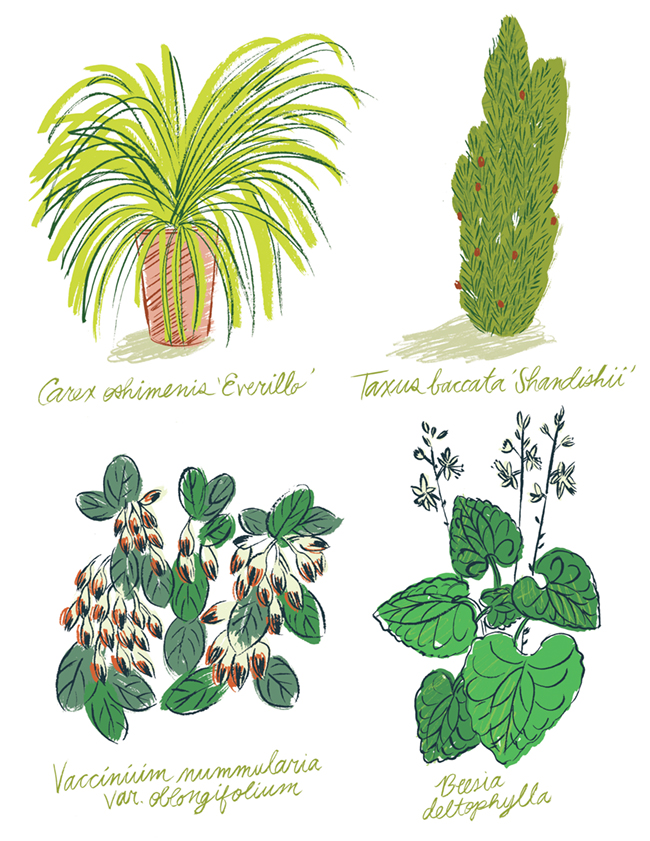 Tiny Garden Plants Illustration by Katy Dockrill