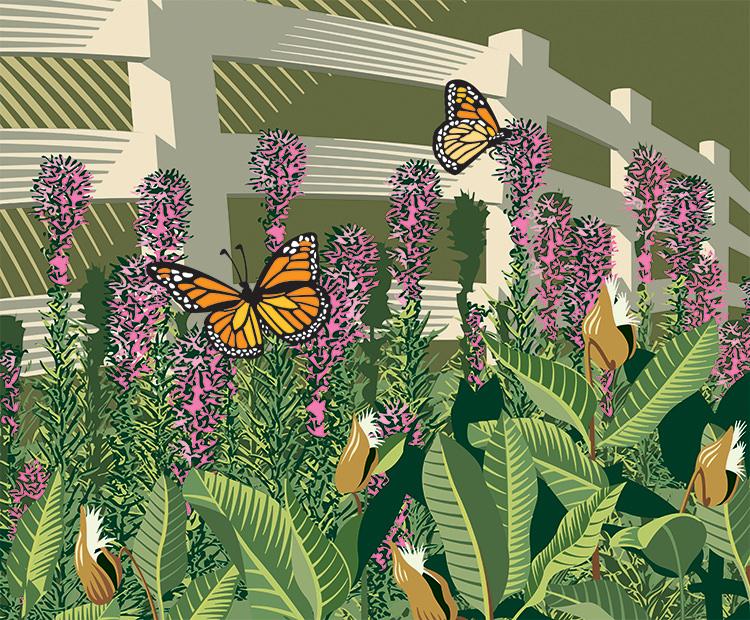Butterflies in Meadow - GA618
