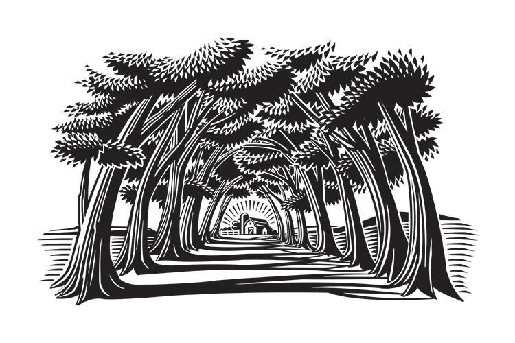 Treelined Road - GA557