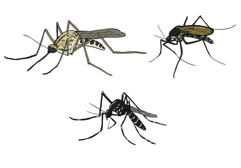 Mosquitos - MM848