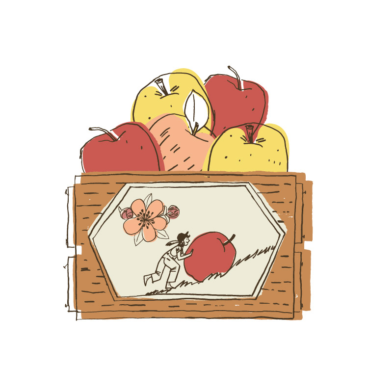 Apple Crate - KD507