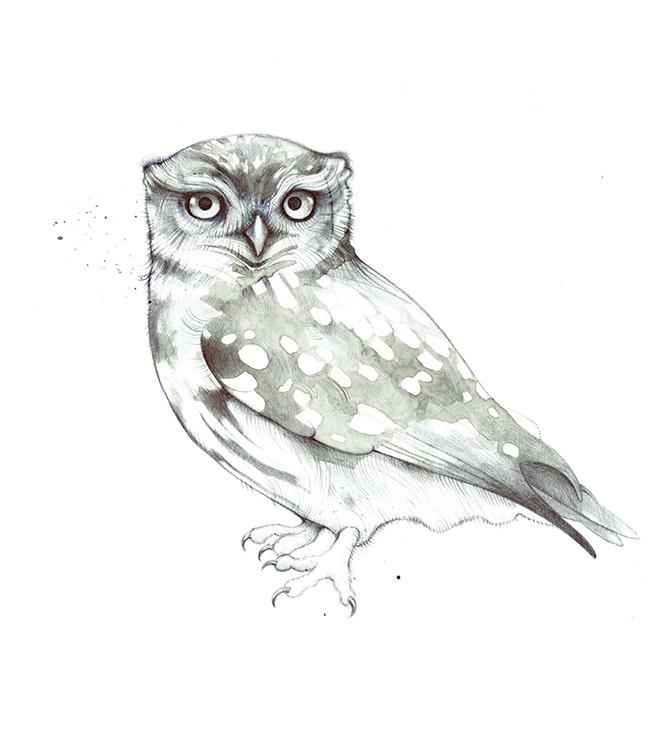 Barn Owl III - TB183