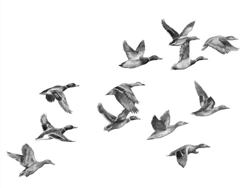 Flock of Geese - JD419
