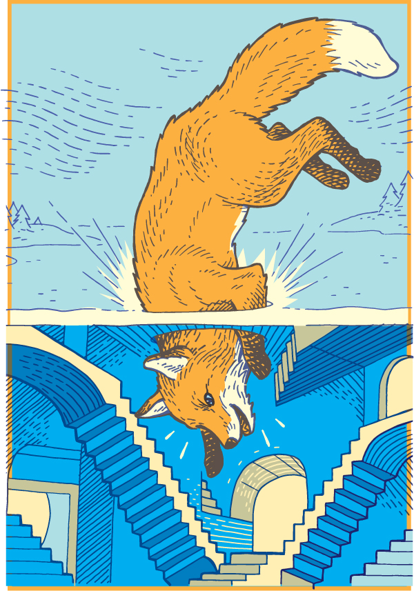 Curious Fox - CW643