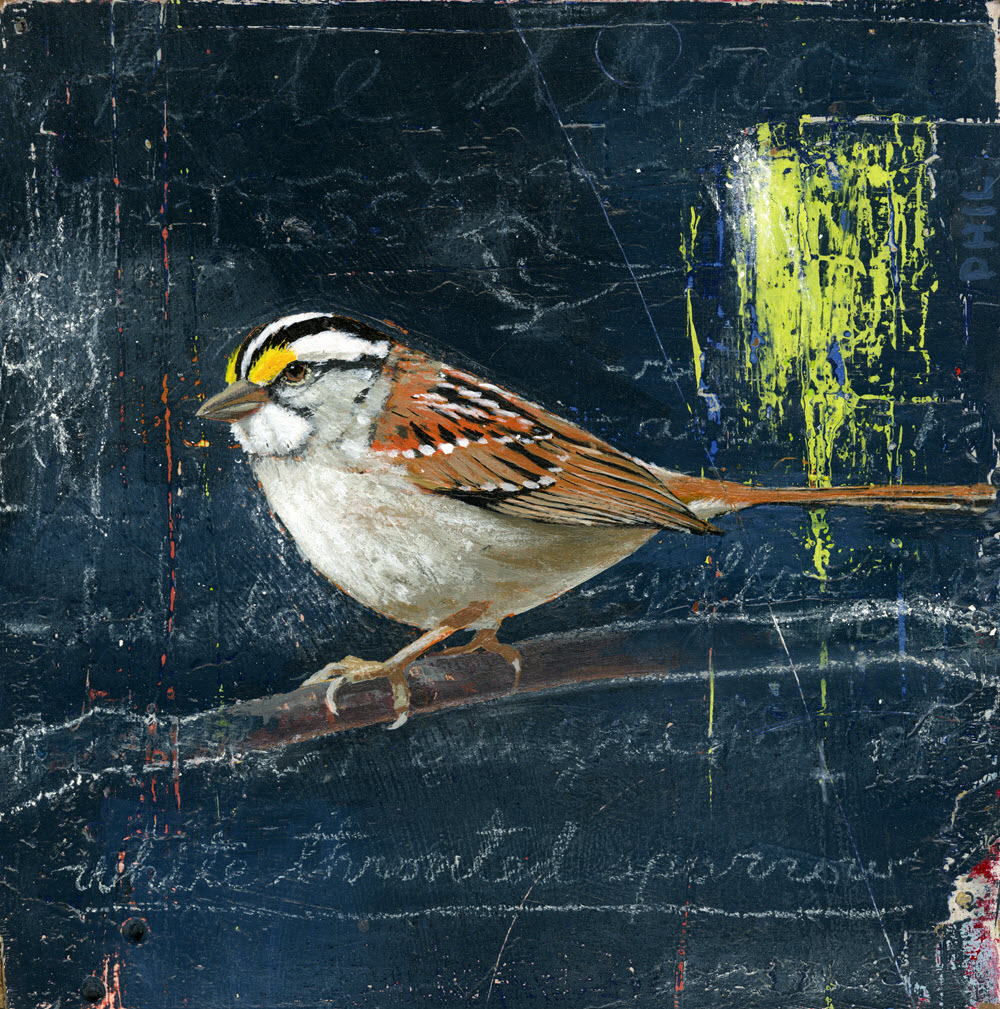 White-Throated Sparrow - PG463