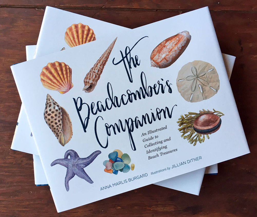 The Beachcomber's Companion cover illustration by Jillian Ditner.