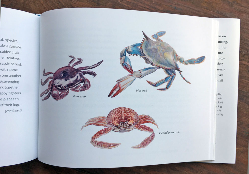 The Beachcomber's Companion interior illustration by Jillian Ditner.