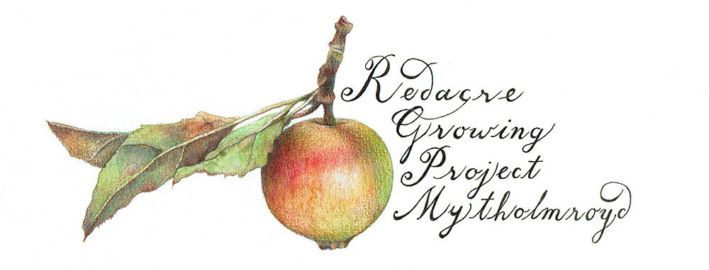 Illustration by Talya Baldwin. Redacre Growing Project.