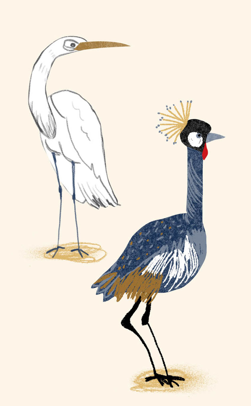 Southern Birds - NN316