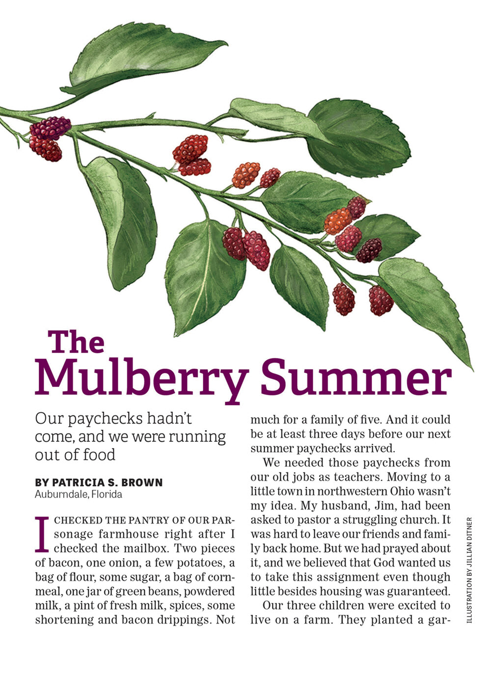 Mulberry Summer - JD462a