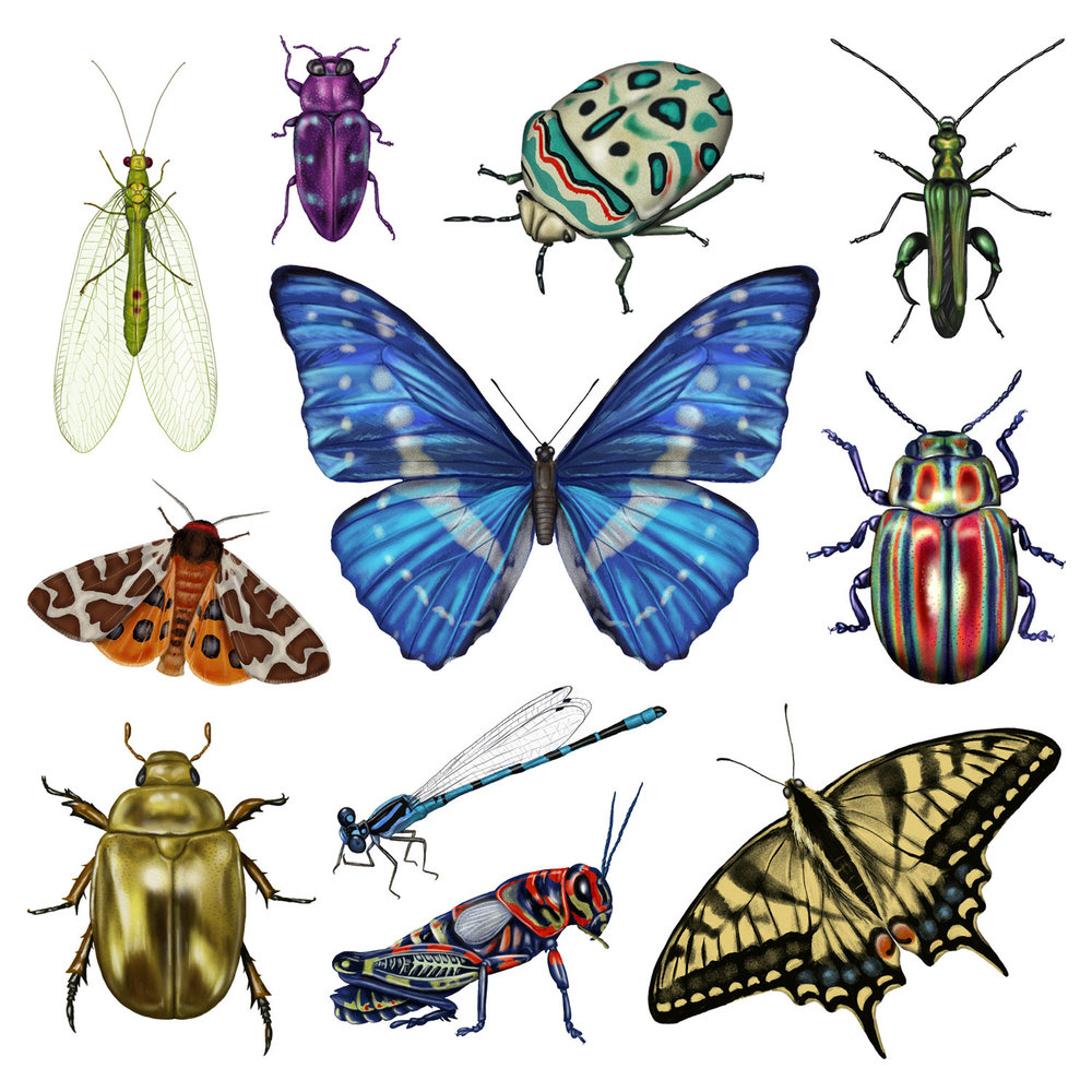 Pretty Bugs - JD469
