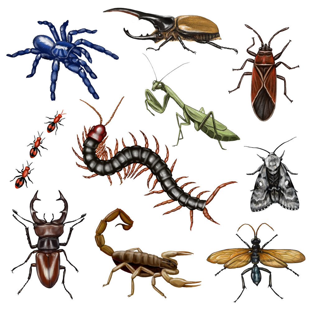 Scary Bugs - JD471
