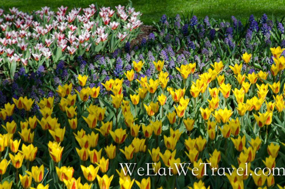 wewt-netherlands-keukenhof-2156.jpg