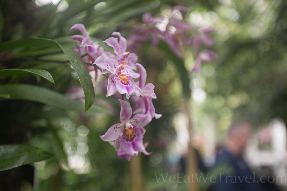 WEWT 2017.03 NYBT Orchid show-8656.jpg