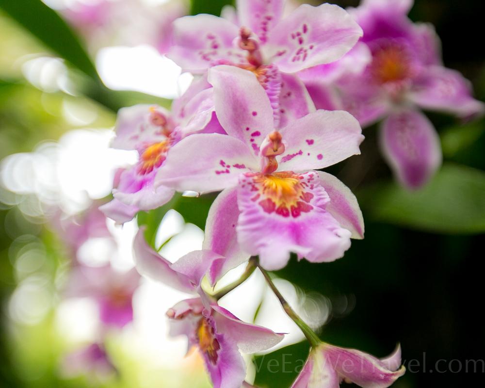 WEWT 2017.03 NYBT Orchid show-8655.jpg
