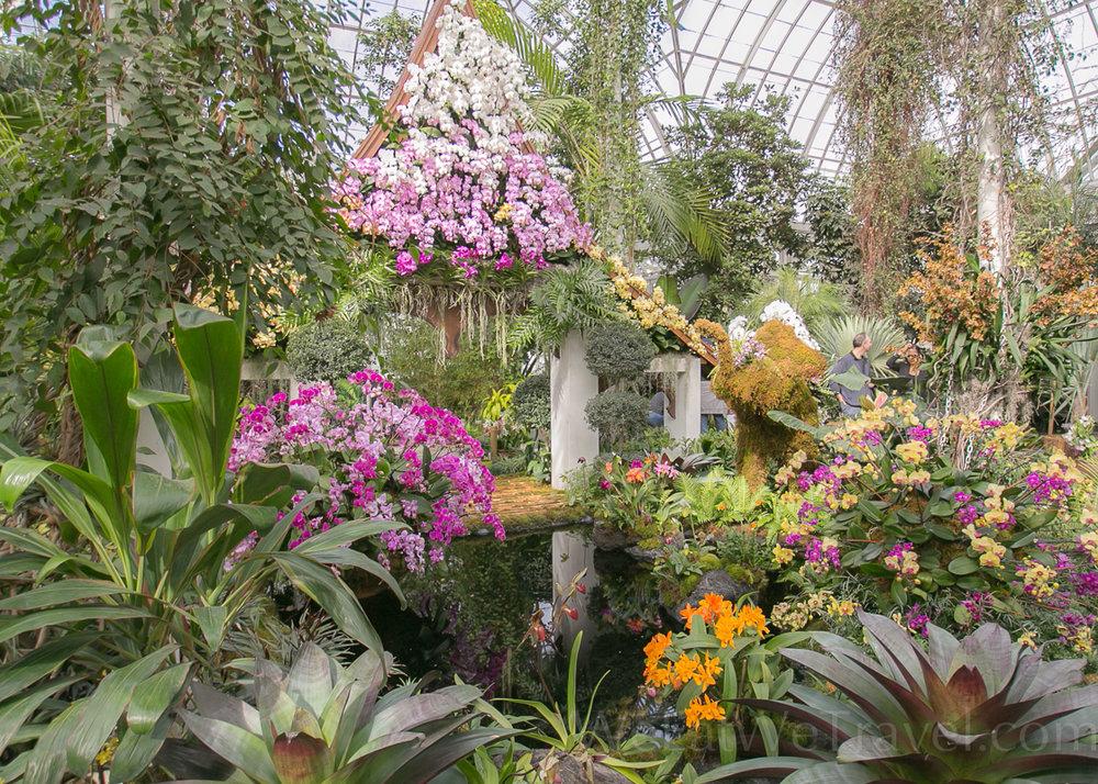 WEWT 2017.03 NYBT Orchid show-8742.jpg