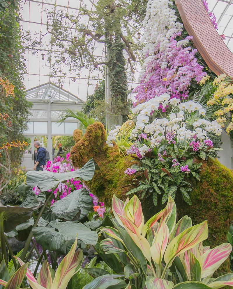 WEWT 2017.03 NYBT Orchid show-8751.jpg