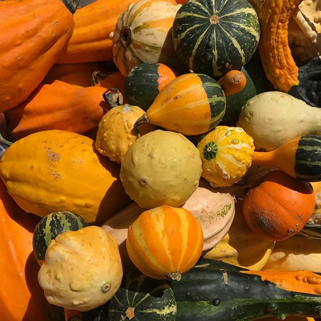 It's feeling like Autumn and it's Gourd-eous outside ☺️ as we wander through the Union Square Greenmarket @unsqgreenmarket #gourds #farmersmarket #nyc