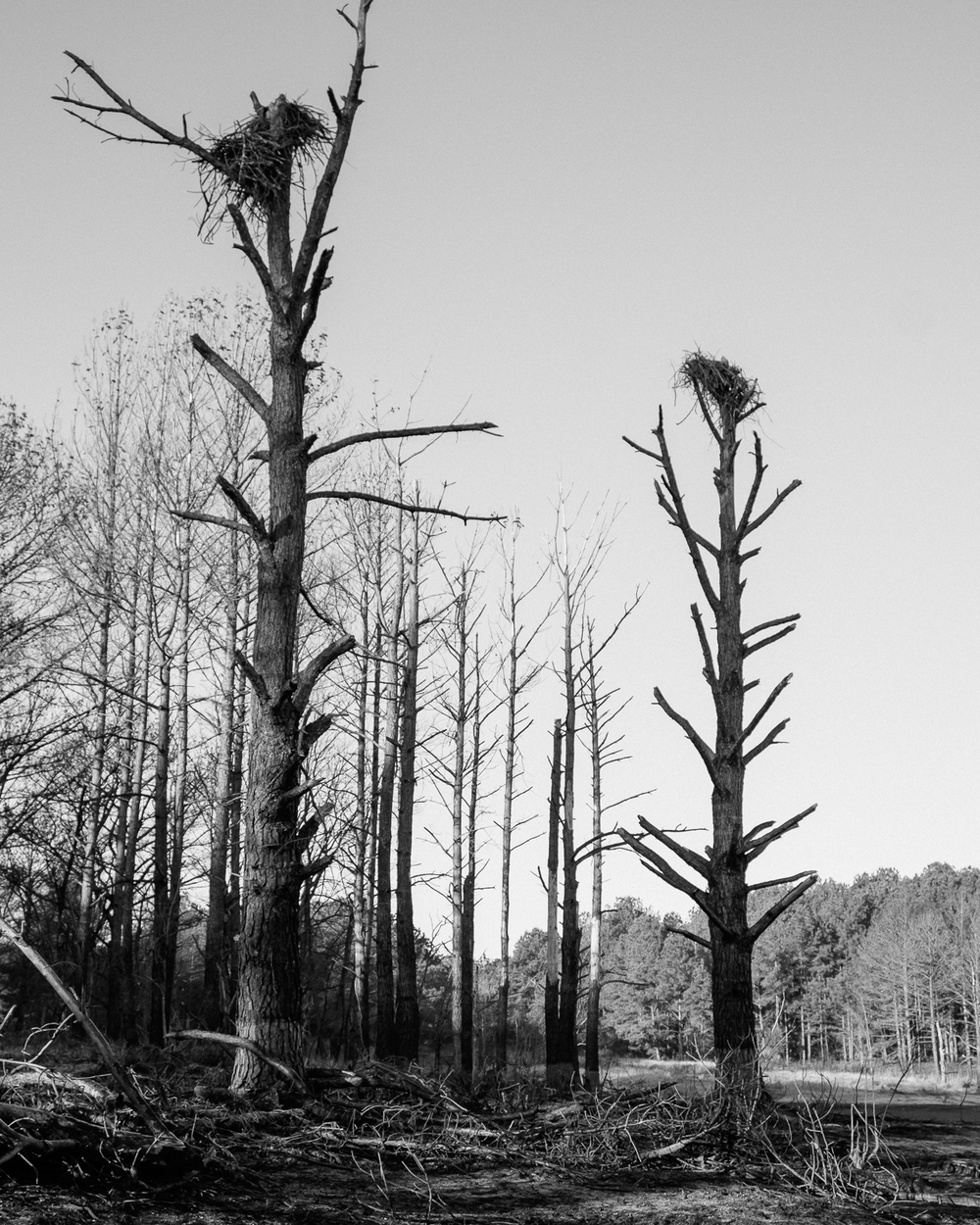 Jordan Lake, North Carolina, 2015-2.jpg