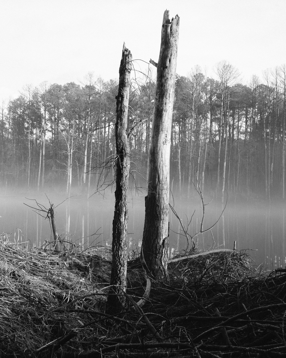 Jordan Lake, North Carolina, 2015-5.jpg