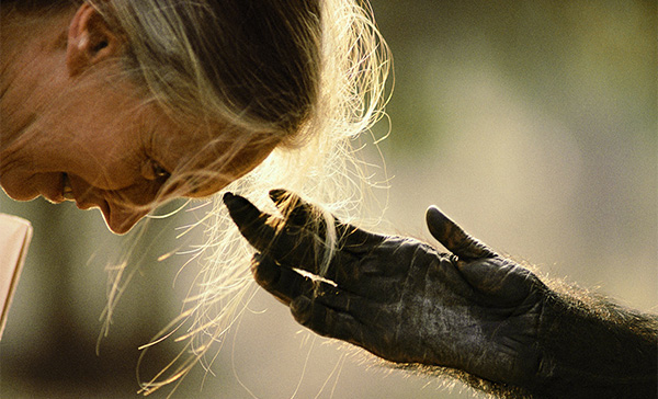 Dr.-Jane-Goodall-chimp-hand-reaching-out-1.jpg