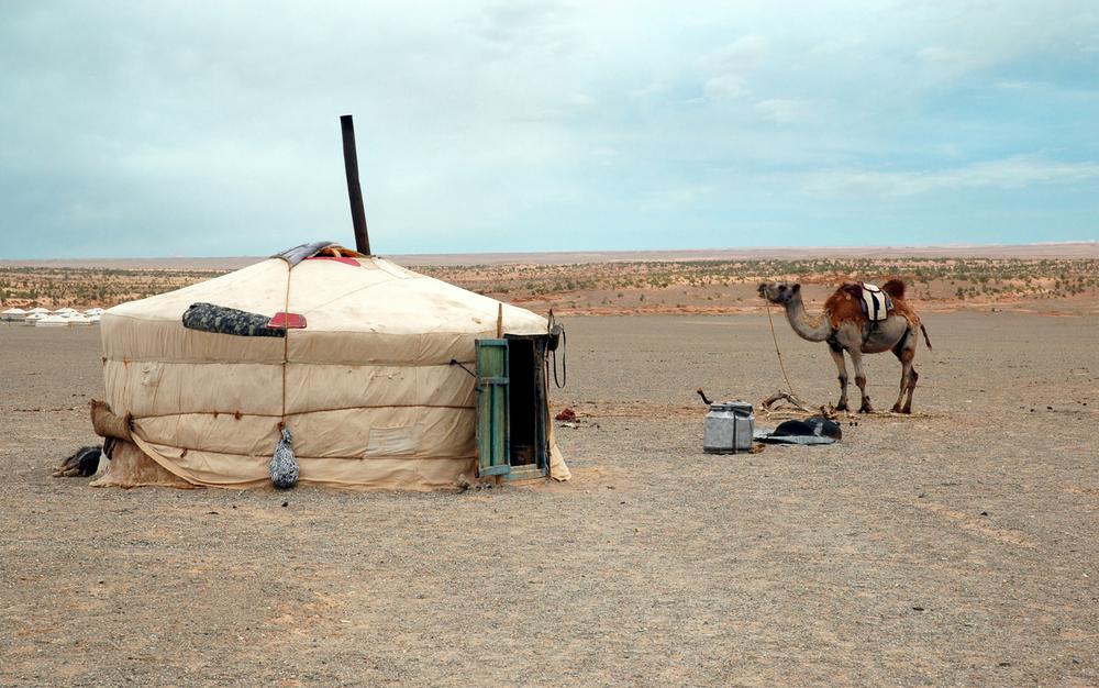 5 july camel.jpg