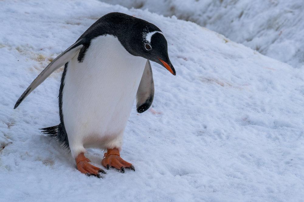 Antarctica00107-2.jpg