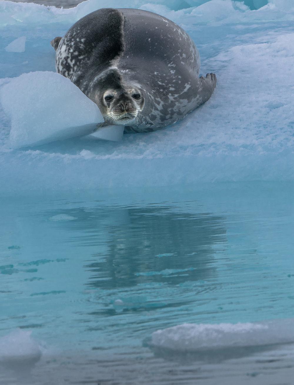 Antarctica00159-133.jpg
