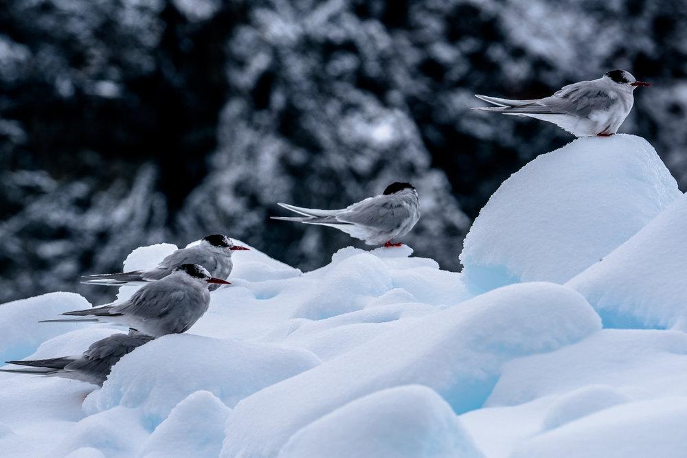 Antarctica00382-97.jpg