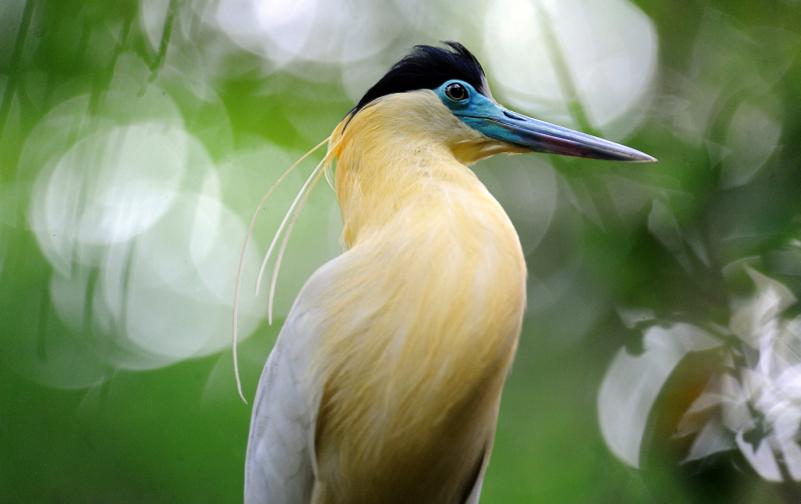 birding001.jpg