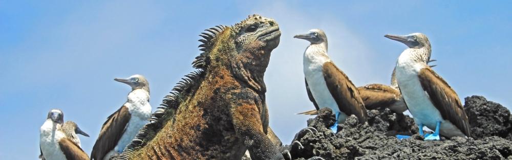 GAPALAGOS & THE AMAZON